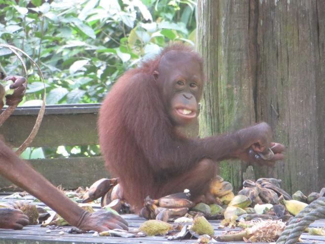 Snacking on his bananas!