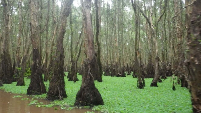 Eerie trees that live in the shallow waters