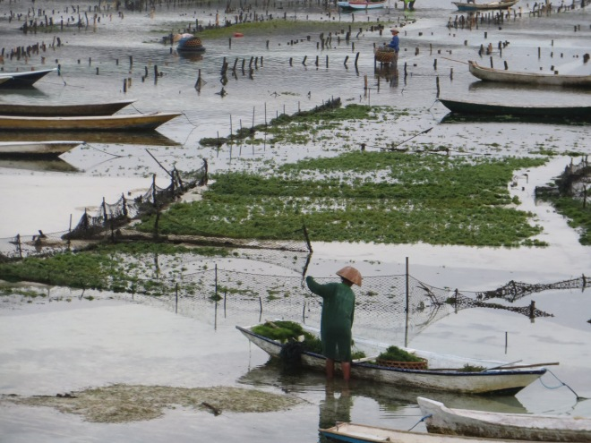 Locals farming the seaweed