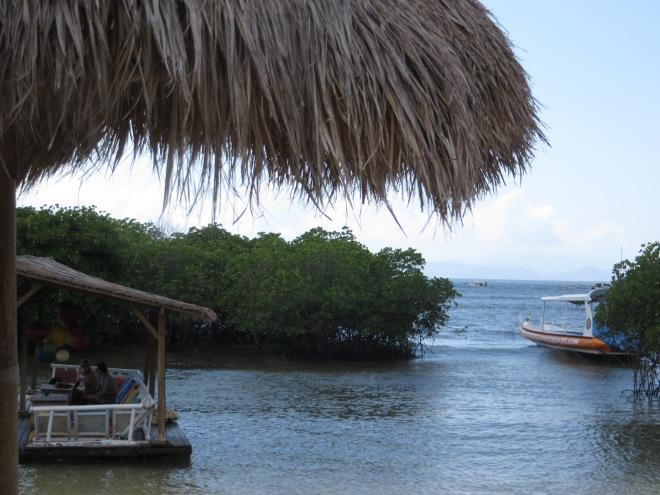 The mangroves around the island
