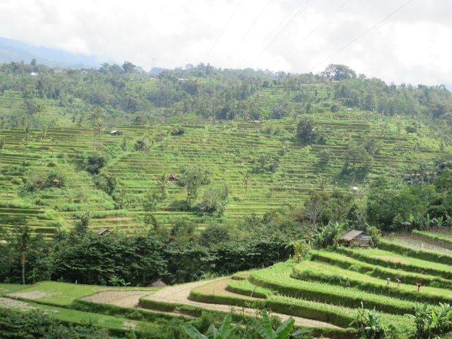 Rice terraces that goes on for miles