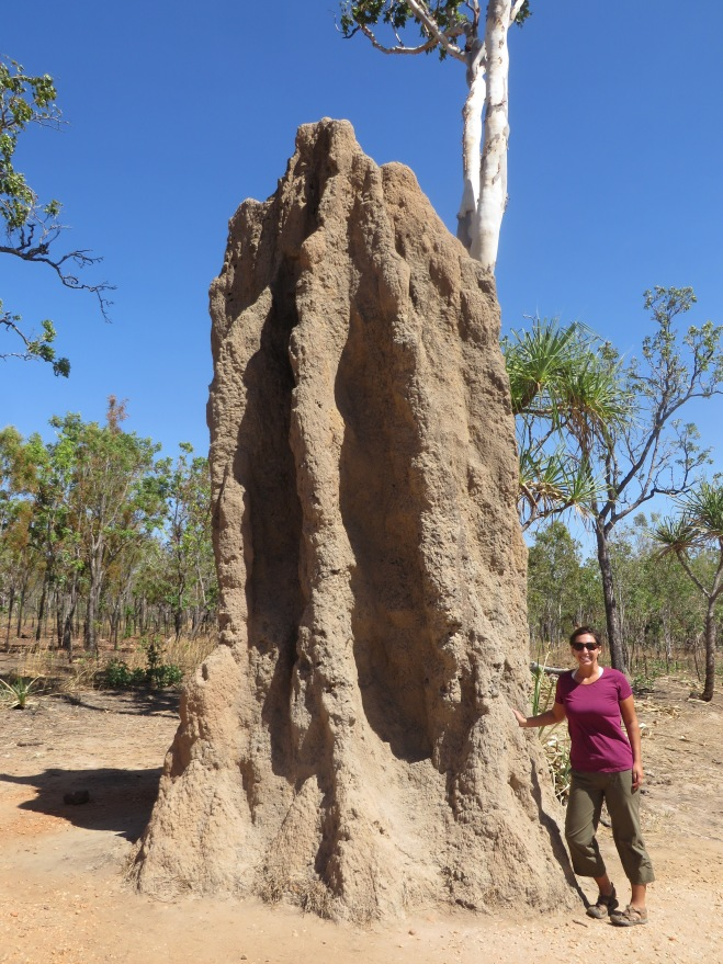 HUGE termite mound! There were so many of them as we drove through the outback!