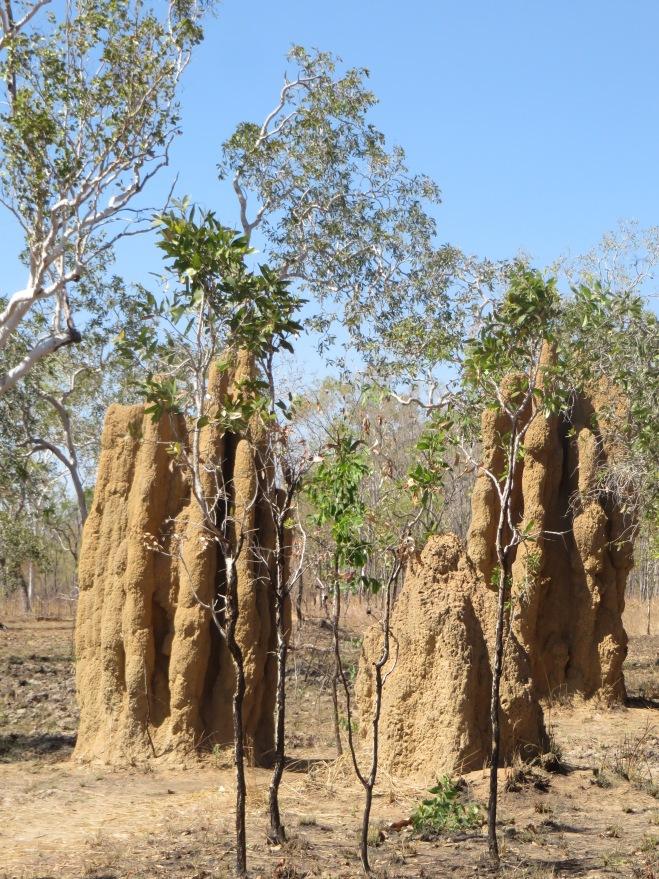 More massive termite mounds as we drove!