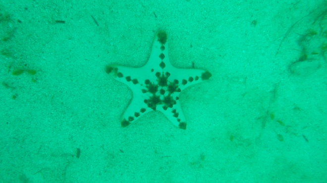 A Chocolate Chip Starfish...yes that's the real name!