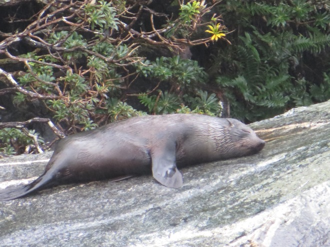 Sleepy seal